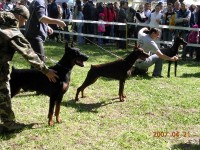 Dobermann ring