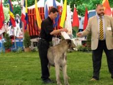 CACIB 2009, ziua 1